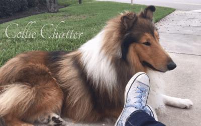Gustav at Emily's feet