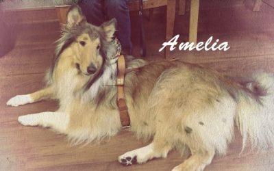 Amelia Vintage