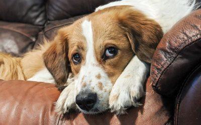 freckles sofa close up portrait