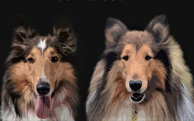 canvas digital pet portrait depicting yoshi (sale and white collie with forehead star) and gustav (sable and white very furry collie)