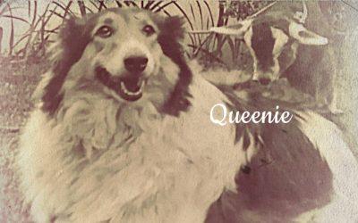 Queenie the Rough Collie