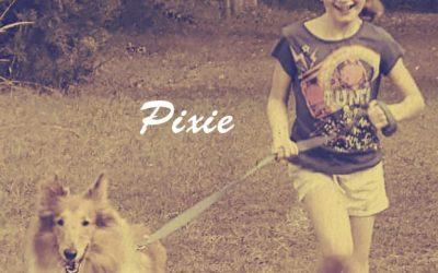 Rough Collie Pixie